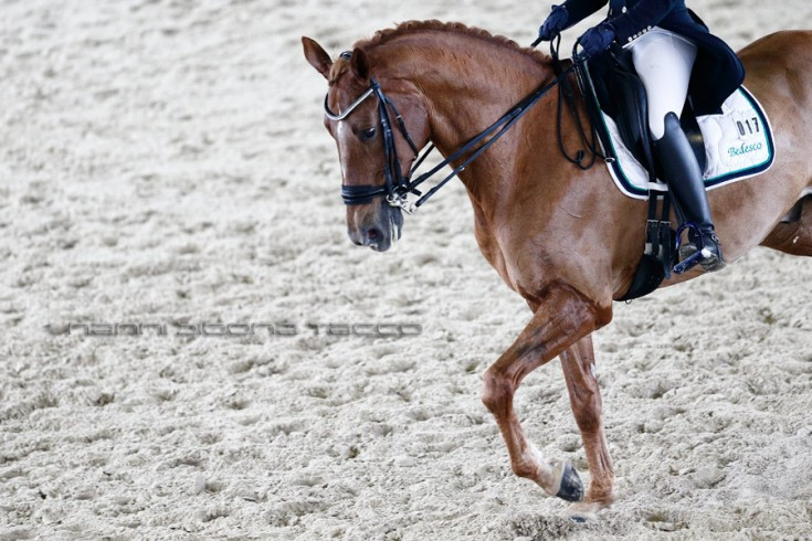 Equitazione: Finale Coppa Italia Dressage - Horsebridge Club None (TO) 14-16/11/2014