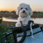 Ciclismo: 2 ruote vs. 4 zampe – Si può andare in bici con il cane a Torino?